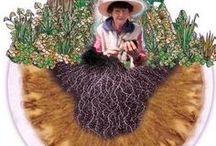 Agricultura Regenerativa / la agricultura del futuro