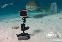 Underwater Photography / #photography #underwaterphotography #UWphotography #UWP #cameras #camerahousings
