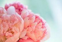 Peonies & Poppies / Peonías y amapolas / Flores