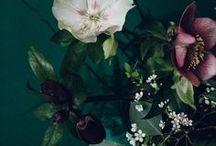 ♣ Botanic