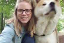 Akita / Lakota, love my doggy