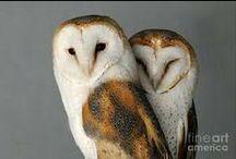 Luv a good 'owl