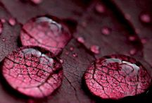 burgundy marsala