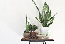 PLANTS AT HOME / Flores, plantas, macetas...
