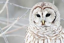 so owls