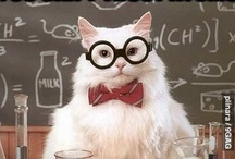 Chemistry Cat / Everyone favourite feline chemist.
