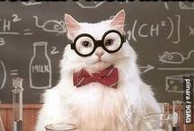Chemistry Cat / Everyone favourite feline chemist.