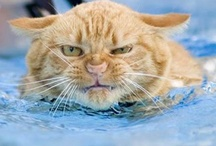 Pets in Pools / A collection of funny pictures of dogs and cats in swimming pools.