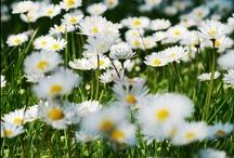 something sweet call garden
