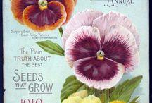Pansies vintage / I love pansies and violas such happy bright faces