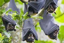 Bats / by Bojana Bikic