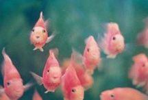 PINK / Ladytalk Roze!