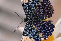 Birds....butterflies....