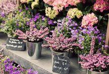 Flower.....herbs