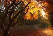 Autumn & Fall