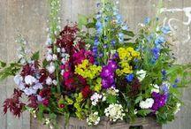 Hage / Ideer til planter, sammenplantinger og ting til å lage og ha i hagen.