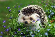 Nydelige dyr / Husdyr, insekter, ville dyr som får meg til å smile