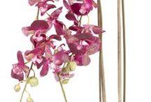 Silkkikasvit / Silkkikasveilla ikivihreää tunnelmaa vuodenajasta riippumatta.