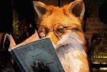 FOX ,Chanterelle