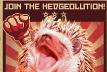 The Hedgehog Revolution