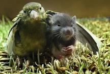 Interspecies Friendship