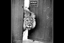 king of animals