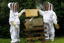 Beekeeping with kids / This is a MahakoBees Pinterest board all about beekeeping with you children. Interesting beekeeping information, young beekeeper photos, and bee related tips and tricks. Come and visit our main site: http://www.mahakobees.com/blog for much more information.