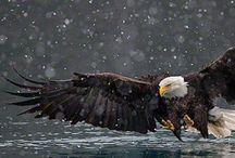 Extraordinary photography