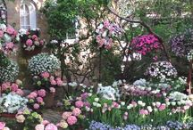 Cottage garden / The romance of a country garden cannot be matched