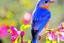 A little bird told me!