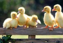 The ducks are all in a row!