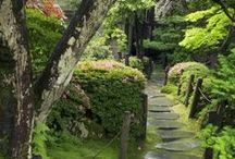 Garden / by Jill Pence