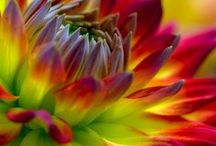 Art Flower Photography and Art / Photographs and Art with the Flowers!  / by Julianne Terrell