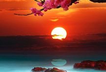 House of the Rising Sun / by Meraki-Girl