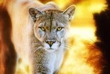 Wonderful Animals