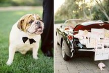 Wedding Pets & Pet Bearer Ideas / Wedding pets incorporated into your special day.