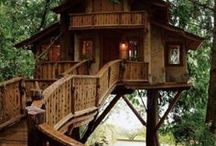 Tree Houses / by Vicky Mcguire