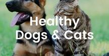 Healthy Dogs & Cats / Keep your furry friends healthy and healed.