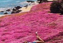 California / by Regan Templeton