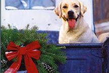 MERRY CHRISTMAS! / Christmas stuff / by Sharon Tarpley