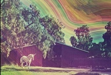Unicorns&Ponies