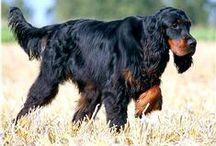 Doggie favourites / by Jenn Roberts