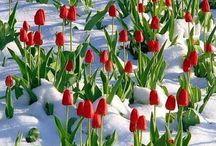 Winter / Snow ☃❄️