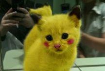 Funny animals / Funny animals/ lustige Tiere - wenn Tiere sprechen könnten... Ich bin mit Katzen aufgewachsen, habe derzeit selbst zwei süße Ragdolls und habe schon so manch eine lustige Situation mit Ihnen erlebt. Laugh. LOVE.