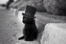 Cats / Cats/ Katzen - für mich die wohl schönsten Tiere auf dieser Welt. Ich bin seit Tag Null mit Katzen aufgewachsen und besitze derzeit selber zwei dieser wunderschönen Tiere. Eine reinrassige  Ragdoll Katze und einen Kater, ein Mix aus Sibirischer Waldkatze und Ragdoll. Sie haben ein fabelhaftes Wesen und erhellen einfach jeden Tag. LOVE