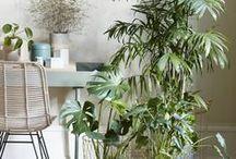 Urban jungle / Create yourself an urban jungle at home. Green is healthy and really inspiring. Grün ist nicht nur gesund und gut fürs Gemüt, es kann auch noch sehr inspirierend sein. Schaffe dir einen Urban Jungle mit Pflanzen und Blumen zuhause.