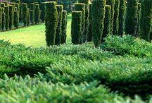 Kesämaa trees & shrubs