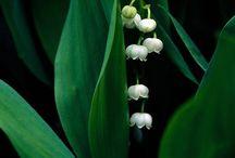 Kesämaa luonnonkasvit