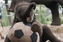 Everything elephants / by Lisa DeNuzzo