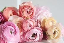 Fabulous Flowers / Beautiful flowers, floral arrangements, flower crowns, flower quotes, flower gardens, and everything floral.